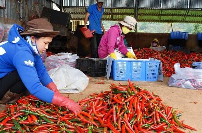 CBI hỗ trợ xuất khẩu thực phẩm vào châu Âu