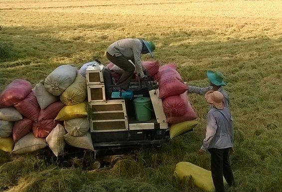 Các tổ chức quốc tế cam kết hỗ trợ tái cơ cấu nông nghiệp VN