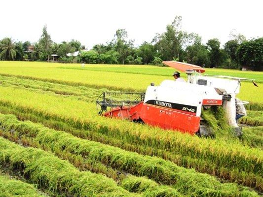 Xuất khẩu gạo thơm tăng trên 36%