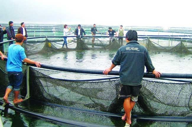 Nga hỗ trợ Việt Nam nuôi cá hồi