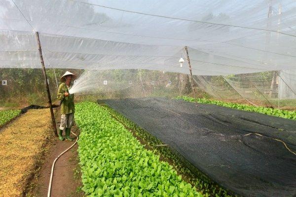 Tìm hiểu về quy trình sàn xuất nông nghiệp hữu cơ
