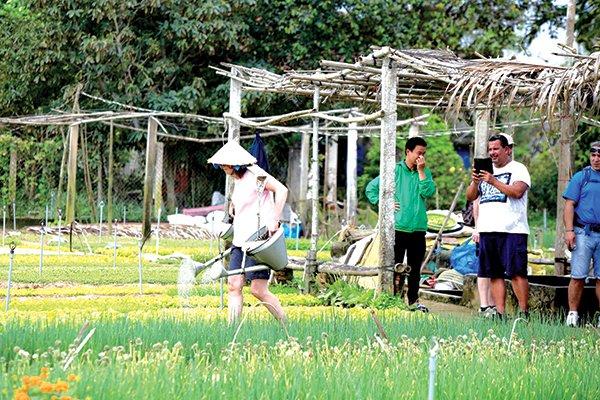 Du khách nước ngoài trải nghiệm hoạt động trồng rau tại làng rau Trà Quế, Quảng Nam. Ảnh: Nhân Tâm