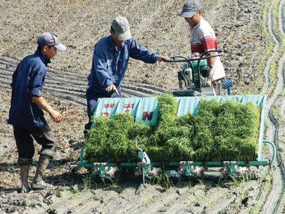 Trả đất cho cây lúa