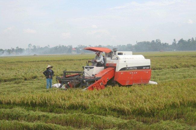 Thị trường nông sản kêu cứu