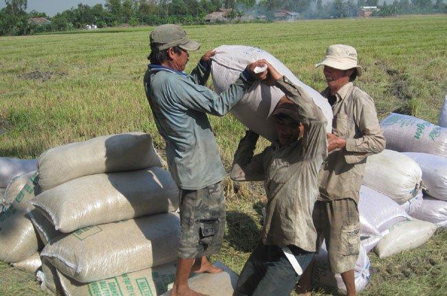 """Ai tạm trữ lúa gạo: """"Cuộc chiến"""" chưa hồi kết"""