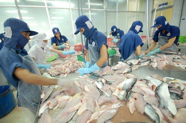 Thiếu cá nhưng người nuôi cá cần thận trọng