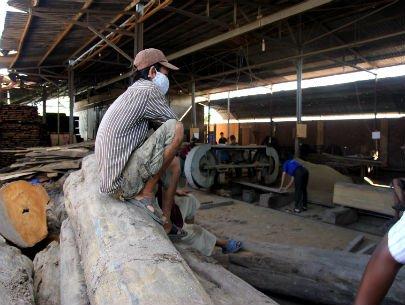 Gỗ chuẩn bị được đưa vào cưa xẻ, xử lý ở một nhà máy chế biến gỗ ở tỉnh Bình Dương. Ảnh: Phạm Thái