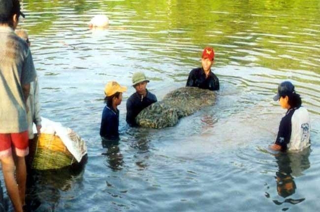 """Nguyên liệu là một trong những căn """"bệnh"""" nan giải của ngành thủy sản. Ảnh: TL"""