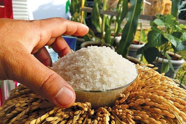 Gạo hữu cơ của doanh nghiệp trong nước - Ảnh: TC.