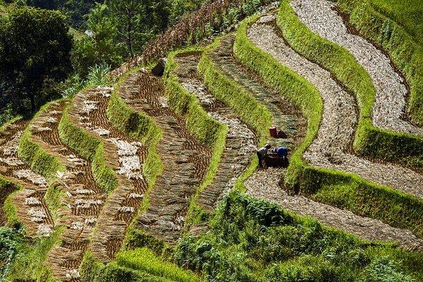 Bà con nông dân đang chuẩn bị vỡ đất cho mùa vụ mới.