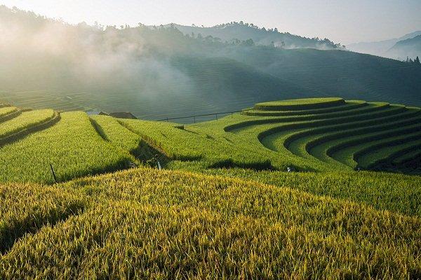 Lúa đã bắt đầu chín vàng trên những thửa ruộng.